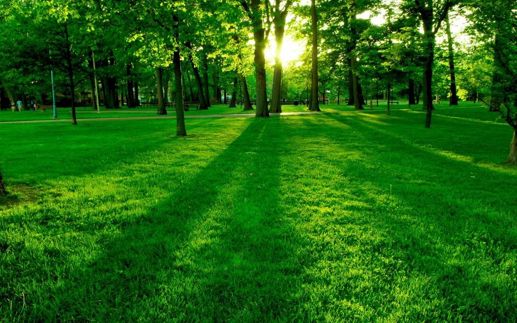 gras-achtergrond2.jpg